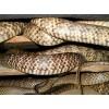 种蛇,商品蛇