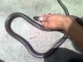 养蛇的风彩