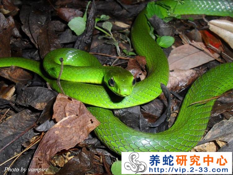葫芦娃中的蛇精和青蛇精图片展示