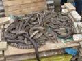 水律蛇 (88)