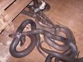 眼镜蛇 (96)