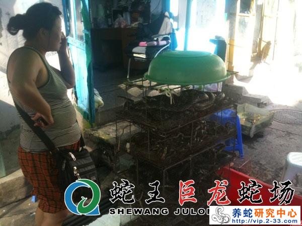 蛇产品交易市场