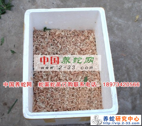 蛇蛋蛇苗包装运输