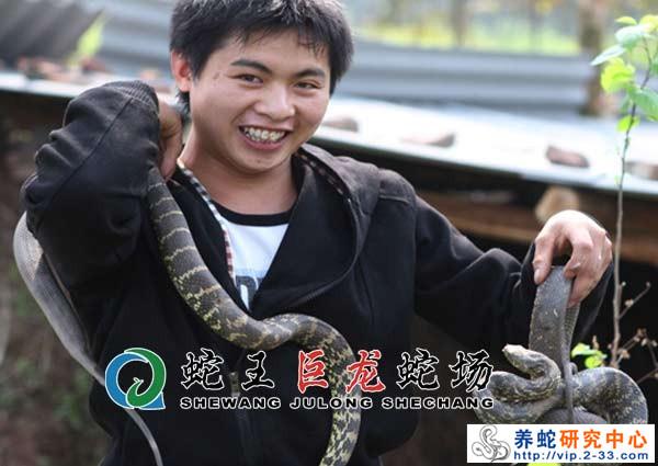 养蛇市场前景