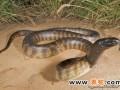 蛇的人工配合饲料