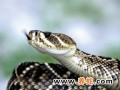 蛇怎样冬眠?