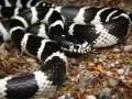 蛇类什么季节产卵(仔)?