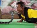 毒蛇的特征