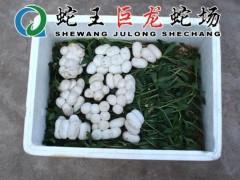 蛇蛋的包装与运输 (8)