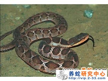 蛇得肺炎会不会传染?