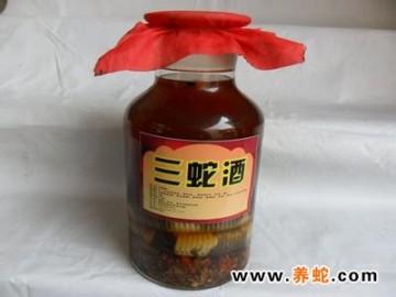 蛇酒的配方及药用