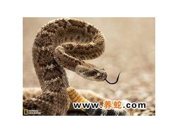 蛇的寿命和繁殖方式