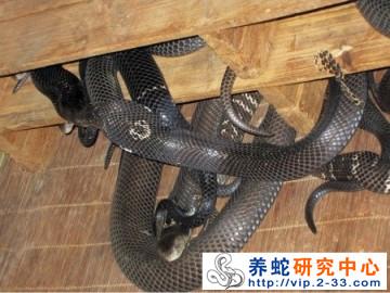 种蛇的运输工具