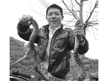 野生蛇类的驯化措施