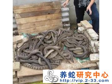 水律蛇的寿命