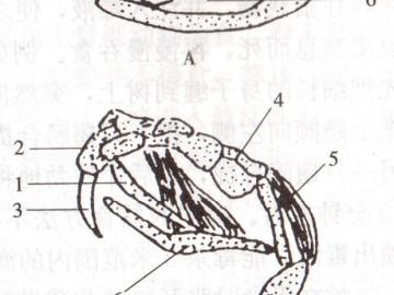 乌梢蛇的食性与摄食