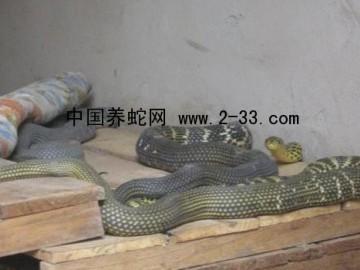 蛇常见病害的防治