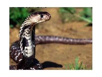 蛇病防治的注意事项