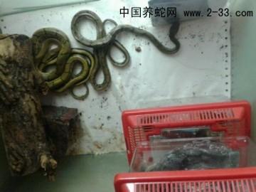 蛇病的给药方法 ()