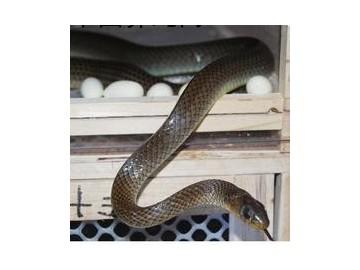 养蛇的经济效益