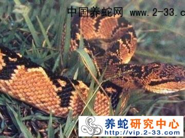 无毒蛇的市场前景 ()