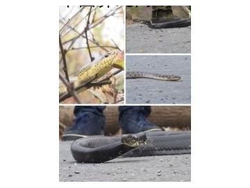 如何保护蛇越冬过夏