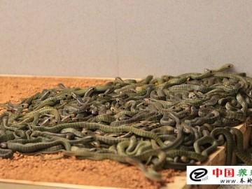 冬季养蛇管理方法