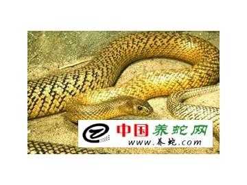 蛇类生物学特征-内部结构-皮肤系统 ()