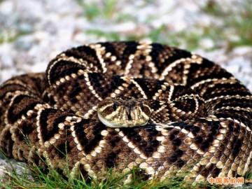 蛇在夏天的生活习性