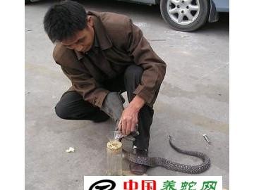 采集蛇毒需要注意的几点