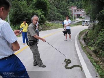 毒蛇的生活习性