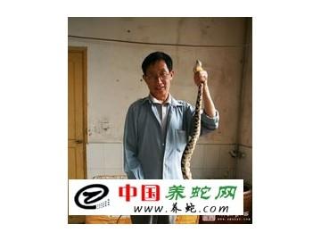 永顺蛇专家引资规模养殖五步蛇