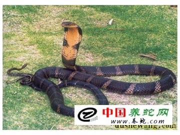 为什么沙土地上不能给蛇盖房子?