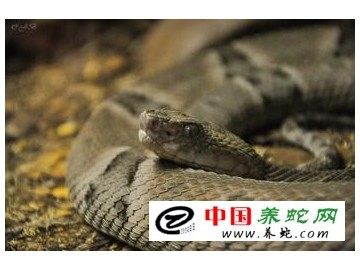 蛇的生理特点及期弱点