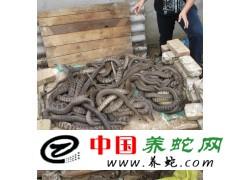 上门收购水律蛇