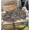 广东 惠州提供 水律蛇