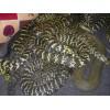 广西玉林市供应:各种种蛇
