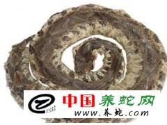 常年收购五步蛇干18756780222