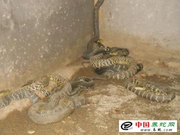 返乡青年创业创出首个养蛇专业户