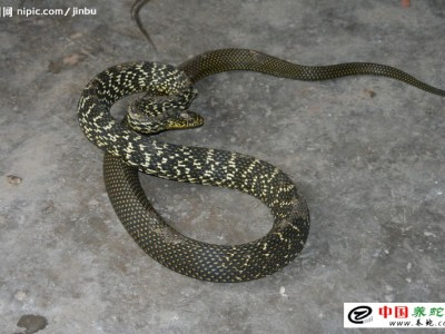 生財有道大王(wang)蛇(she)養殖
