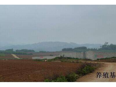 大王蛇养殖场图片