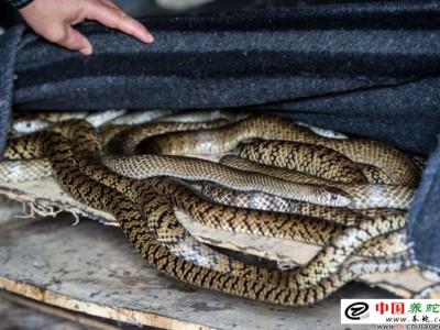 水律蛇的养殖方法