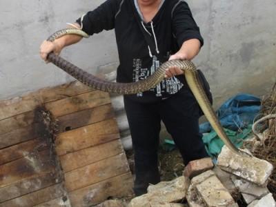 水律蛇怎么养殖