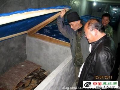 广西灵山水律蛇养殖