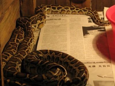 蟒蛇养殖前景