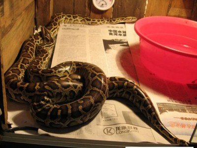 广西蟒蛇养殖场