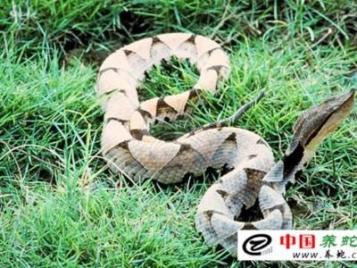 五步蛇养殖场设计