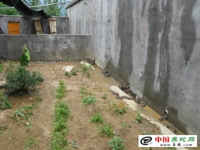 五步蛇养殖场如何修建