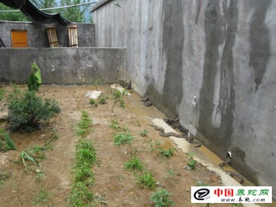 浙江台州五步蛇养殖
