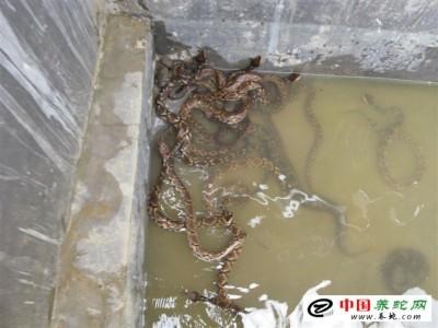 五步蛇养殖场 修建